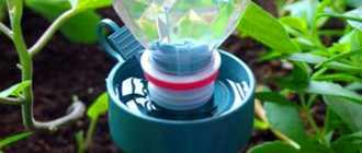 Как сделать полив в теплице своими руками из пластиковых бутылок капельный