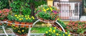 Многолетние цветы для дачи: названия, виды, фото (70 штук)