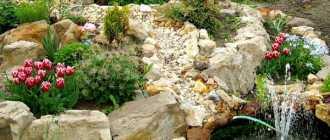 Альпийская горка своими руками: устройство, виды, растения