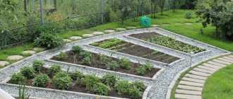 Как сделать дорожки между грядок чтобы не росли сорняки на даче, устройство своими руками
