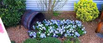 Оформление клумбы возле дома своими руками- фото красивых цветов в частном дворе
