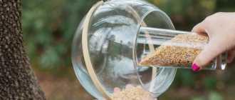 Кормушка для птиц своими руками – фото оригинальные идеи из подручных материалов