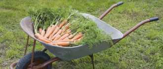 Садовая тачка своими руками или как сделать тележку для перевозки грузов: фото, чертежи и размеры